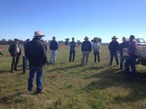 Cranbury/Cudal/Cargo grazing meeting