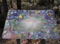 Wildflower interpretive sign - Ironbark Trail, Conimbla NP